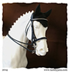 Double bridle for model horses made by Jana Skybova